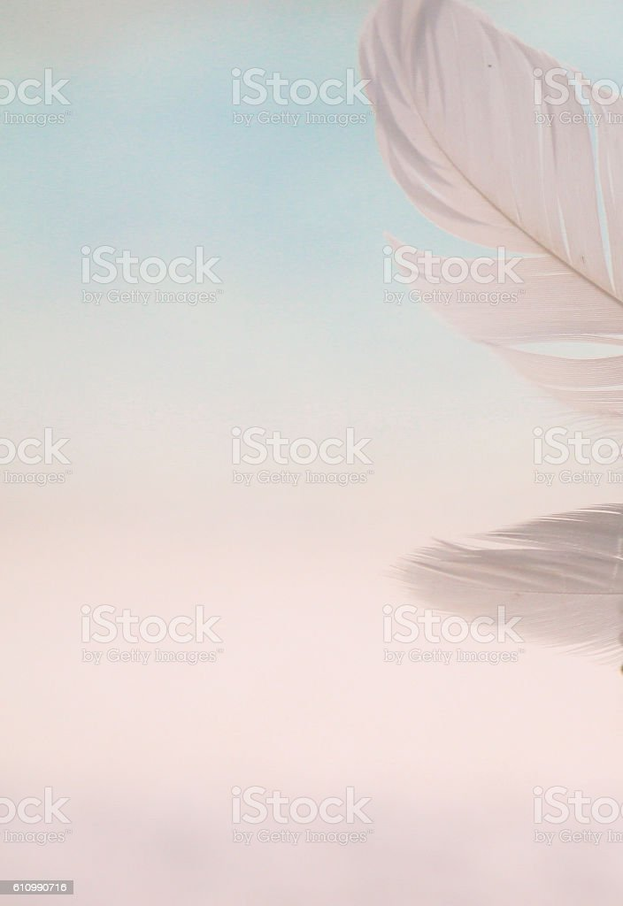 light background with feathers stock photo