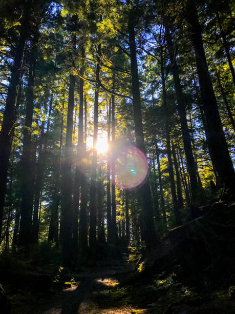 Light Beam Forest stock photo