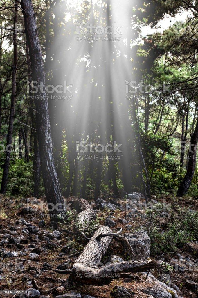 Işık demeti stok fotoğrafı