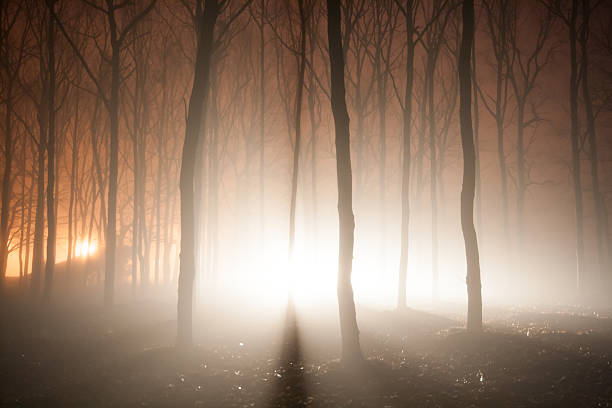Vigas de luz na floresta - foto de acervo