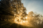 istock light beams through the trees in the wood 494994032