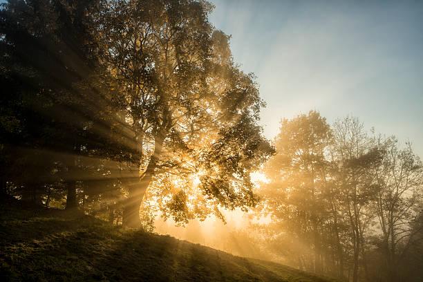 라이트 빔을 통해 나무를 wood - 생태 보전 지역 뉴스 사진 이미지