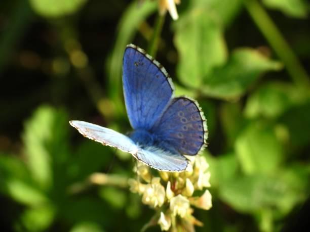 Light blue butterfly picture id1026133938?b=1&k=6&m=1026133938&s=612x612&w=0&h=xp9q8rkhkf3kglevzstptzzbj5zlctdnnsosy4wwl08=