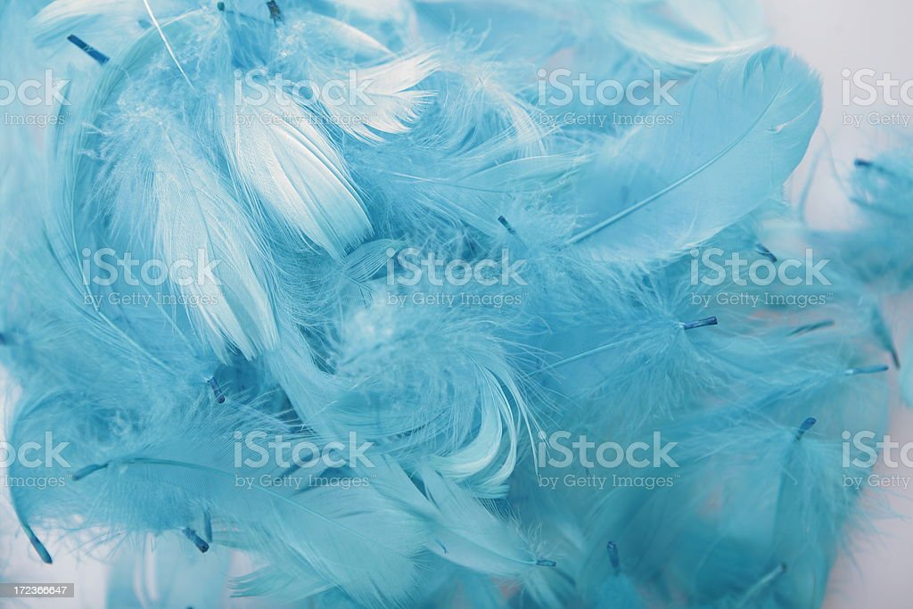 light blue feathers background on white stock photo