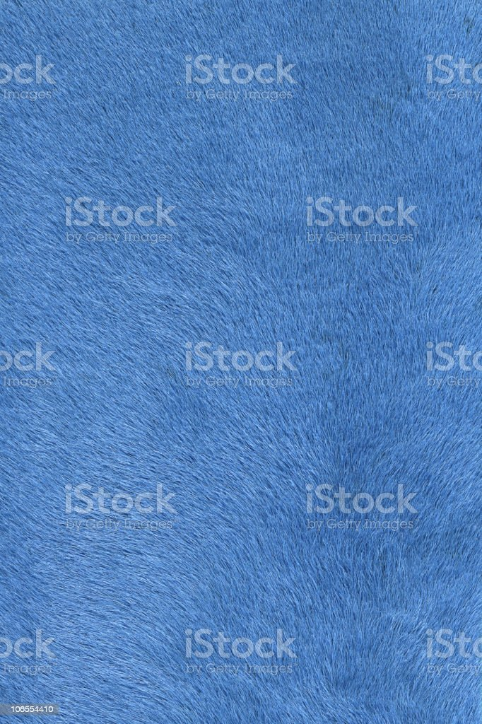 light blue fur royalty-free stock photo