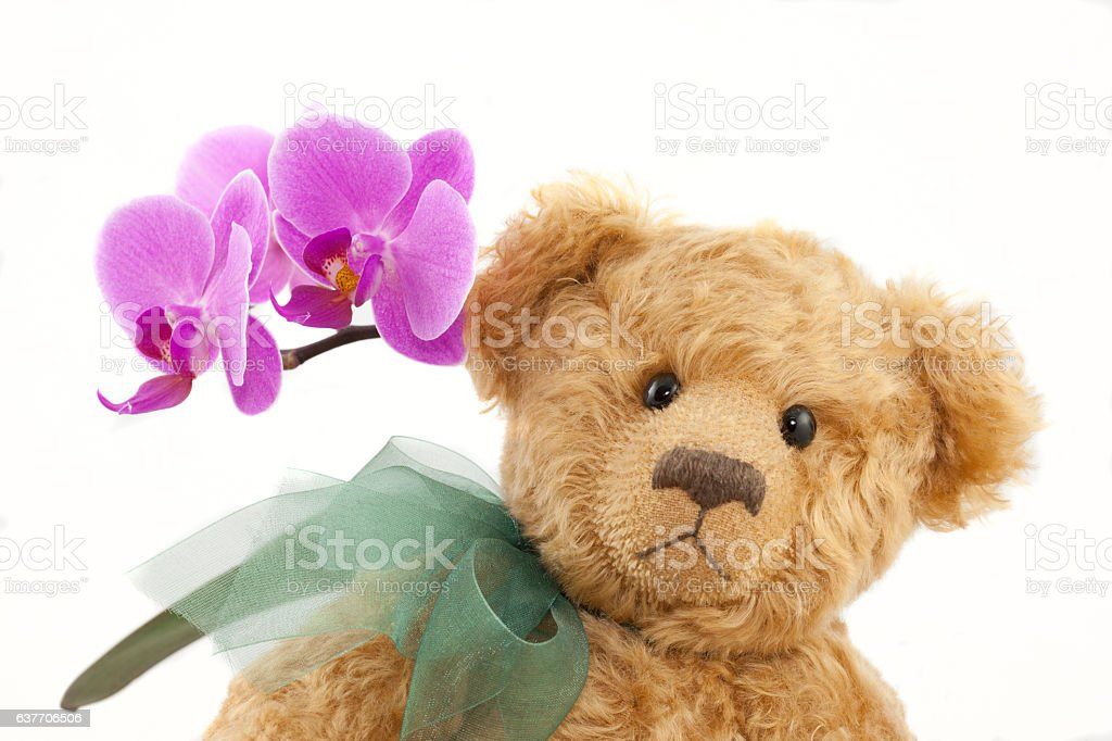 Light Brown Teddy Bear With Green Ribbon and Orchid royalty-free stock photo