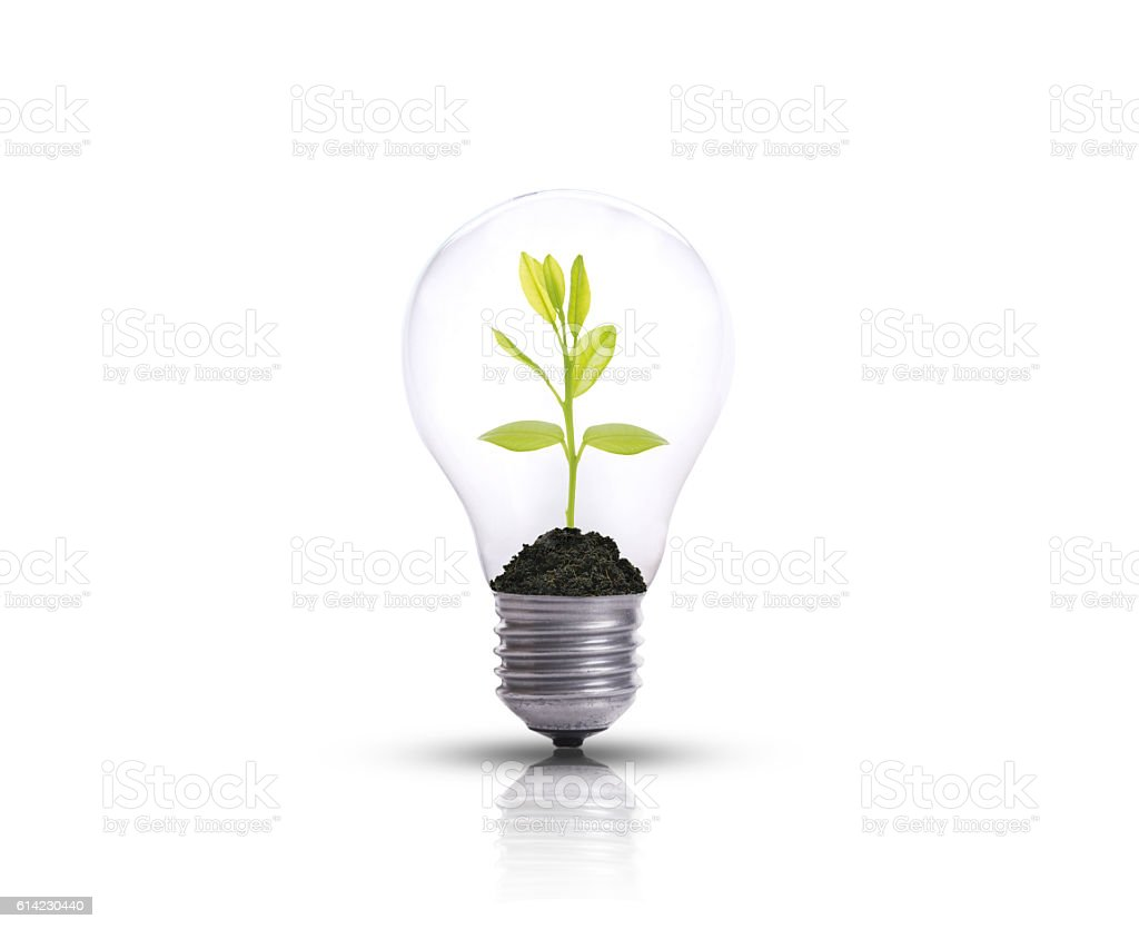 light bulb against tree isolated on white background. – Foto