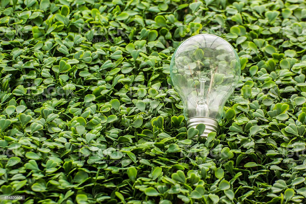 Light bulb in the grass stock photo