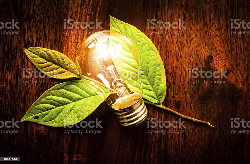 Light bulb on leafs royalty-free stock photo