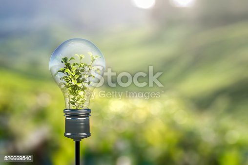 Light bulb with green plant sprout inside