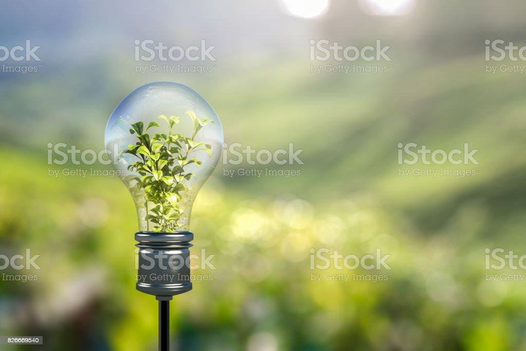 Light bulb stock photo