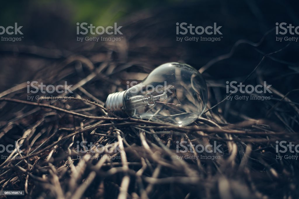 Light Bulb Represent Creativity royalty-free stock photo