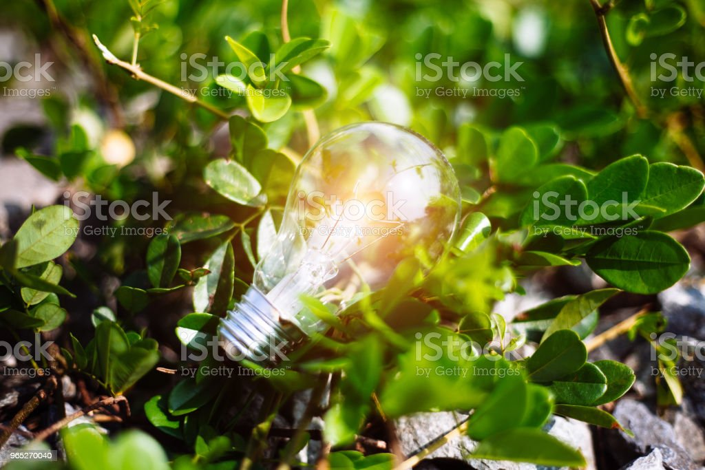 Light Bulb Represent Creativity zbiór zdjęć royalty-free