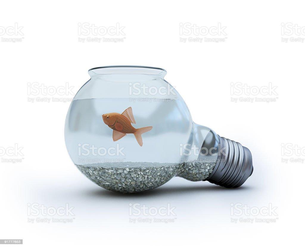 Glühbirne mit Goldfisch – Foto