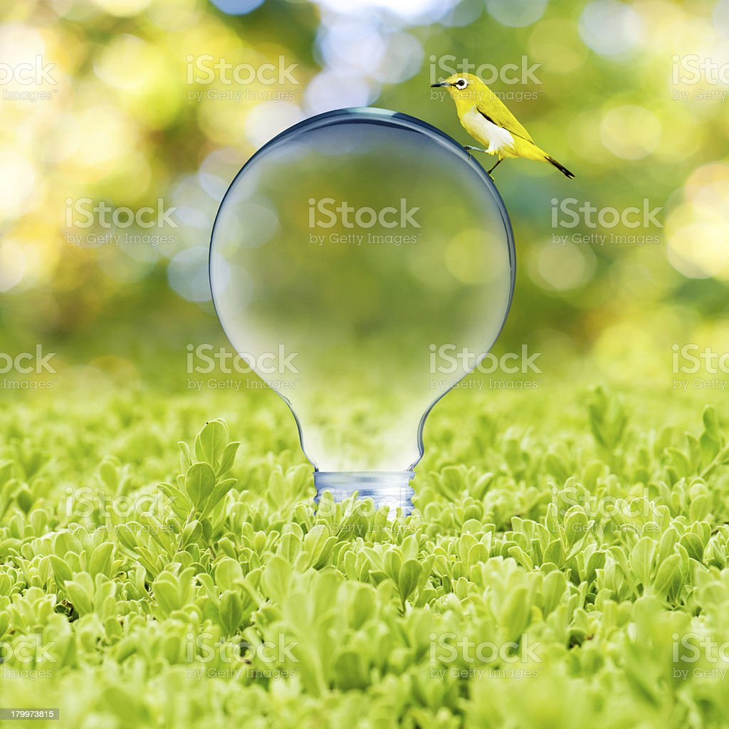 Light bulb with bird royalty-free stock photo