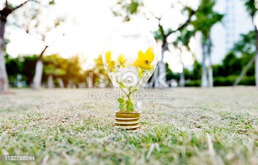 Light bulb with flower on the grass.