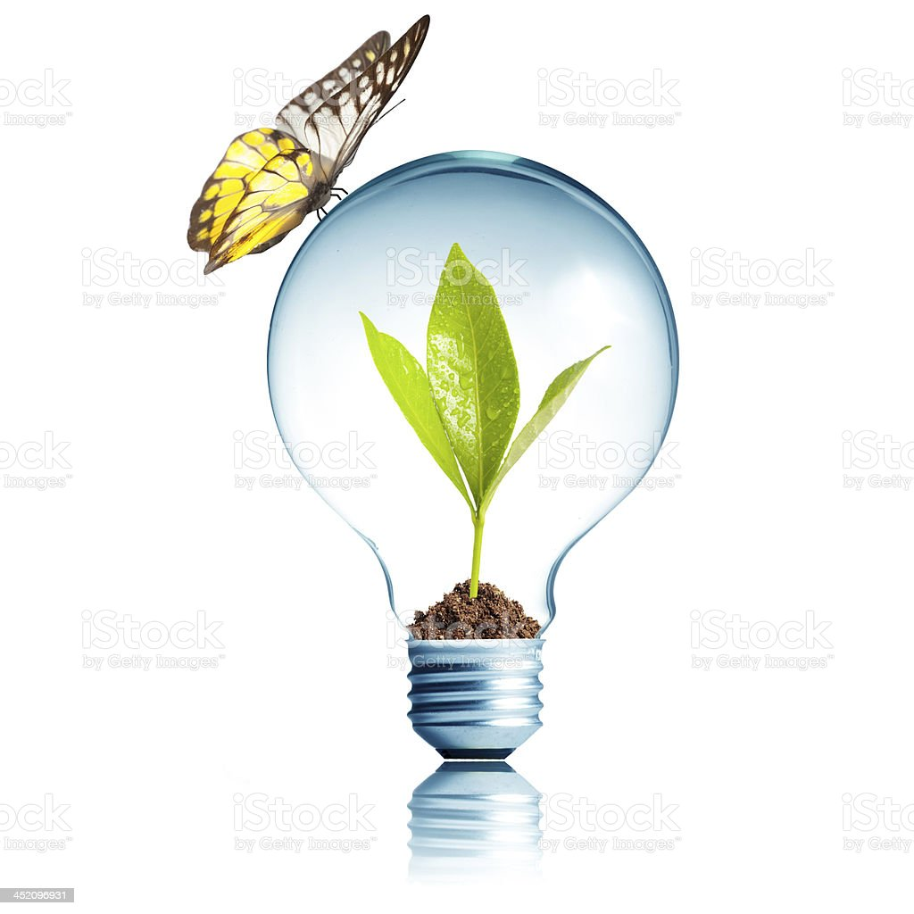 Light Bulb with green plant inside and butterfly on top royalty-free stock photo