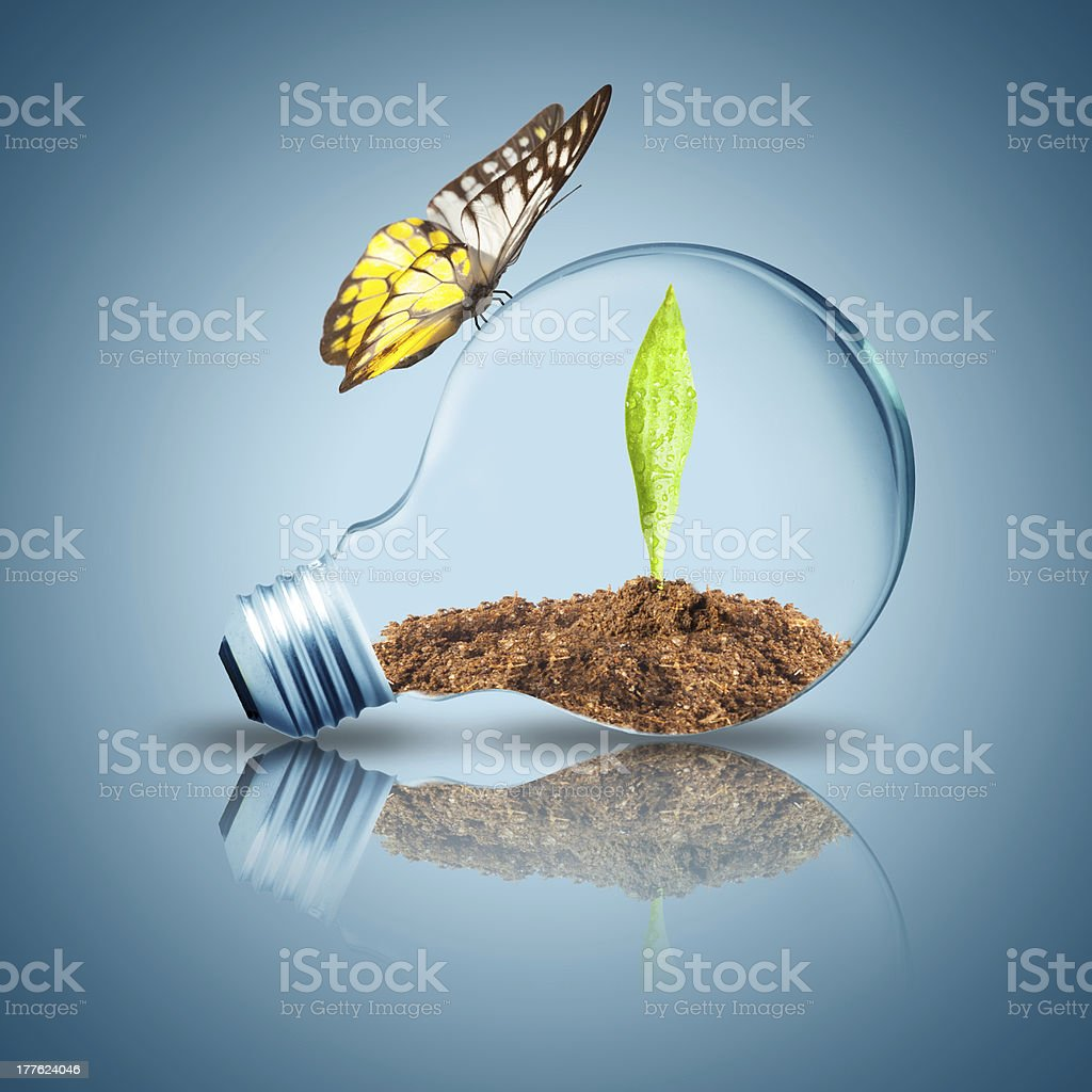 Light Bulb with plant inside and butterfly stock photo