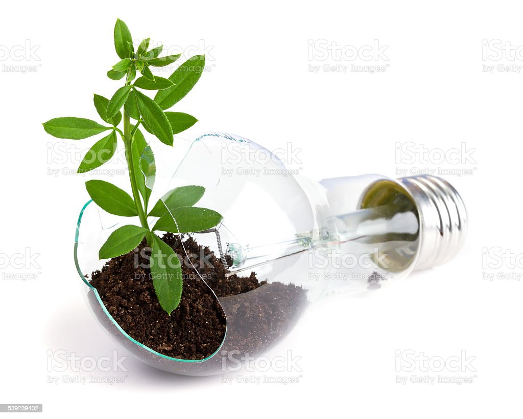 Light bulb with plant royalty-free stock photo