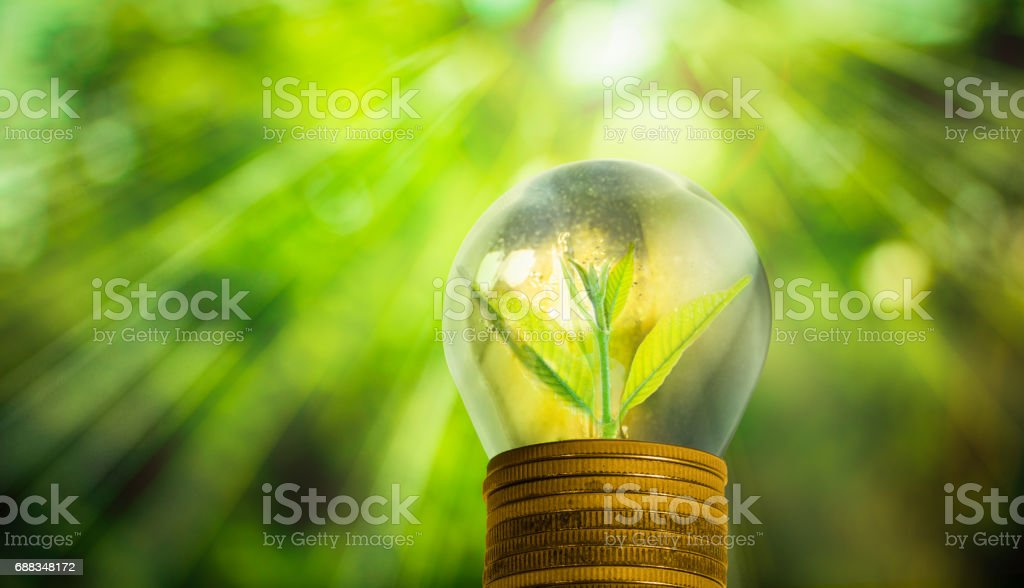 Light bulb with small plant growing inside – Foto