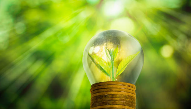 Light bulb with small plant growing inside stock photo