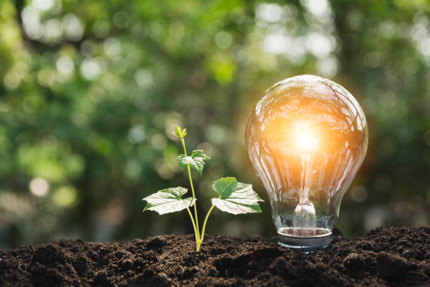 Glühbirnen mit glühender. Technik und Kreativitätskonzept mit Glühbirnen und Kopierplatz für Insert-Text – Foto