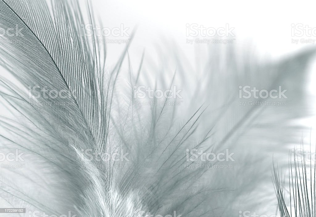 Light feathers against a white background royalty-free stock photo
