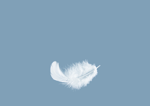Light fluffy a white feather floating in the air with copy space. Feather abstract freedom concept background.