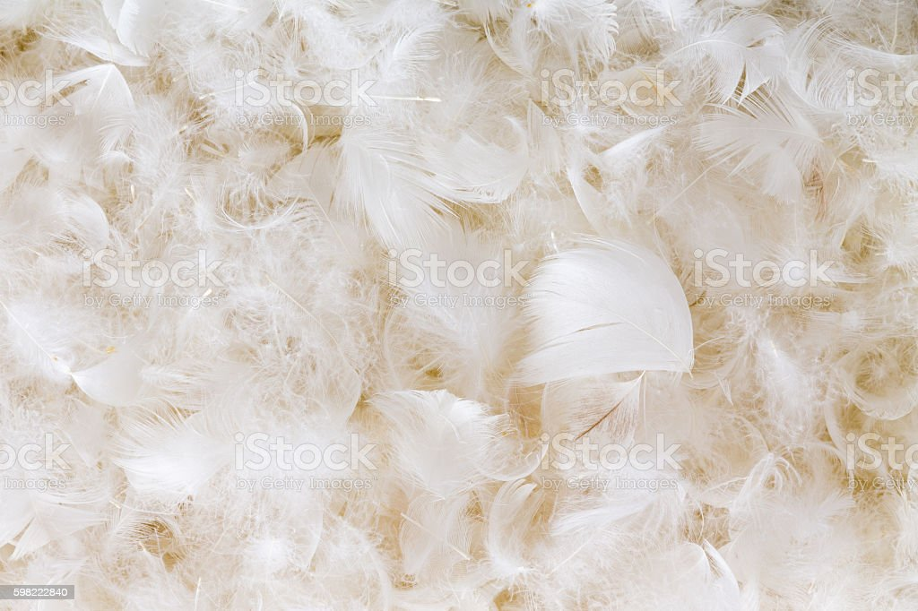 Light fluffy white feather background texture stock photo