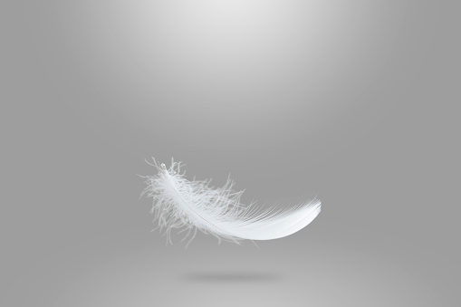 Light fluffy white feather falling down in the air. soft single feather abstract background