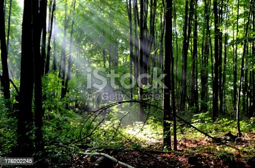istock Light For My Path 176202245