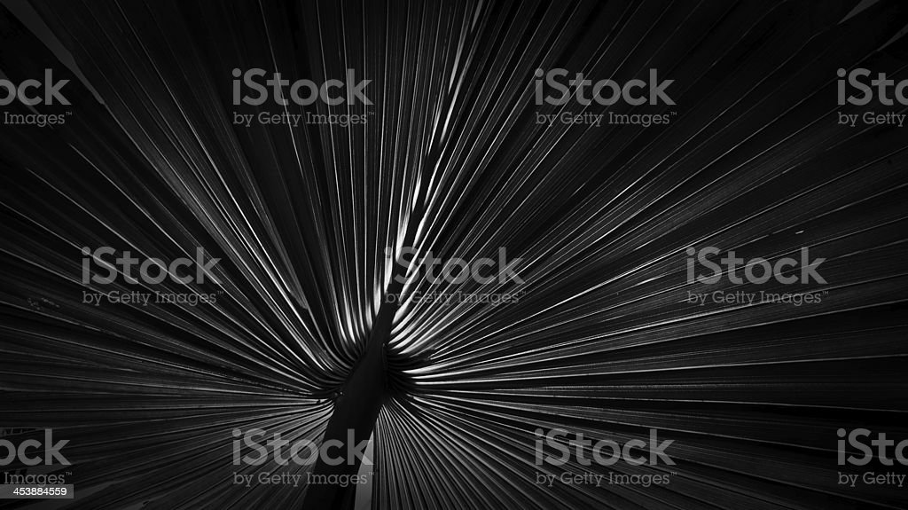 Light game royalty-free stock photo