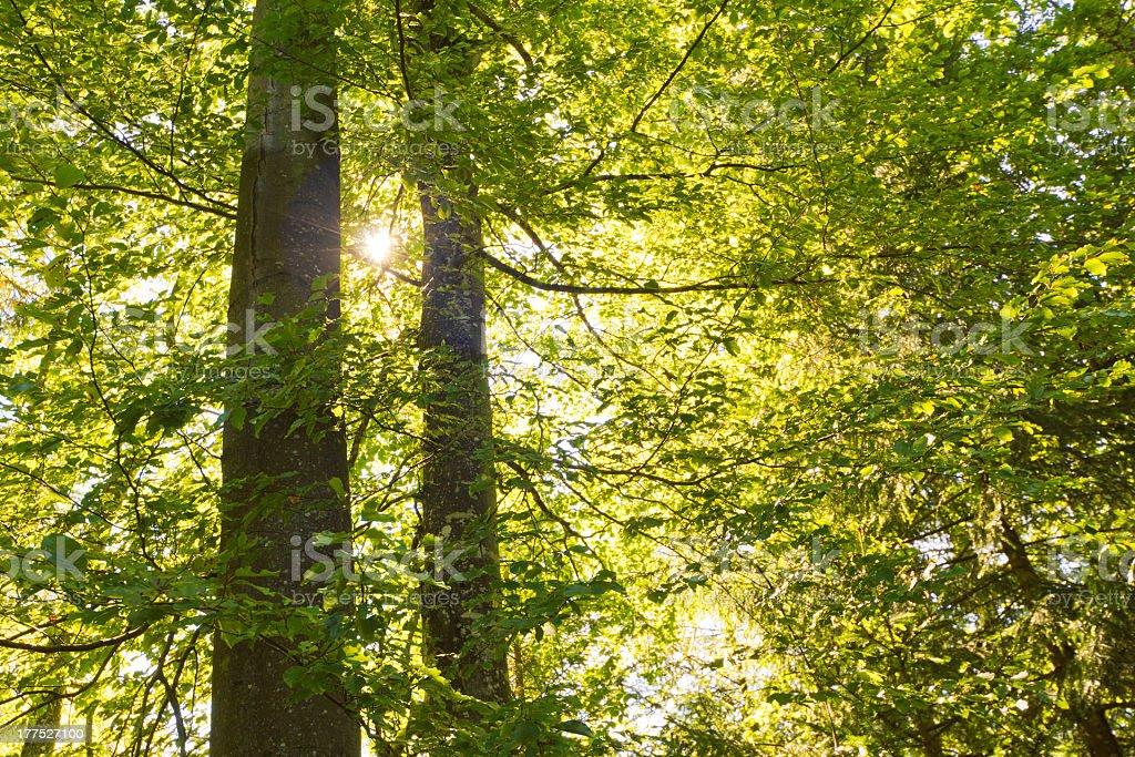 Light Green Foliage stock photo