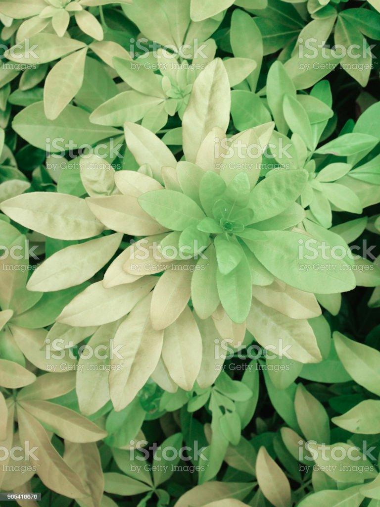 Light green foliage zbiór zdjęć royalty-free