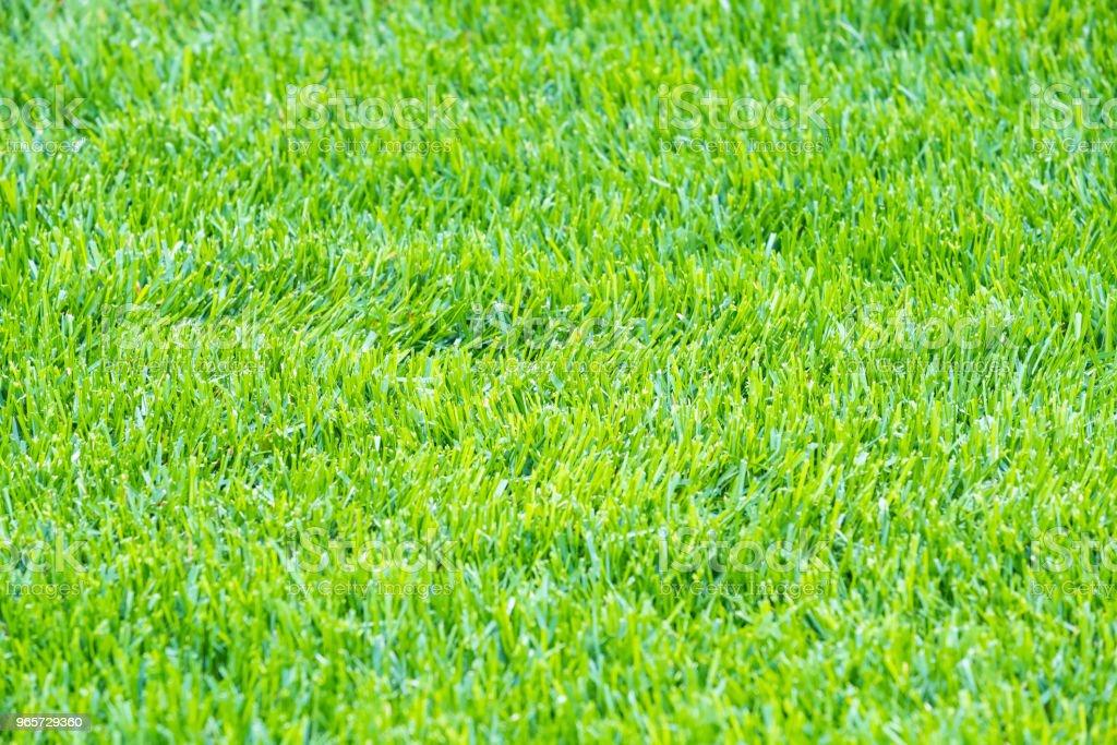 Light Green Grass Background - Royalty-free Ao Ar Livre Foto de stock
