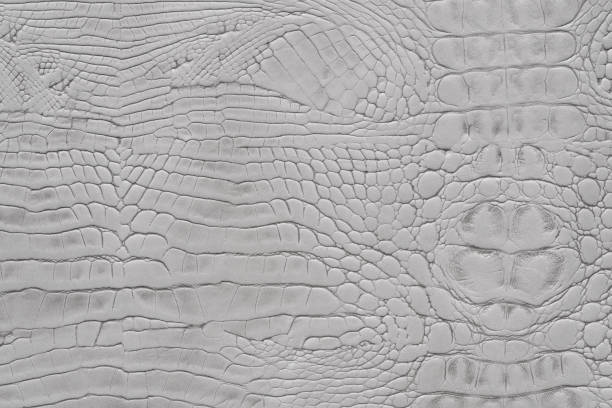 Fondo de color gris claro animal serpiente impresión textura cuero - foto de stock