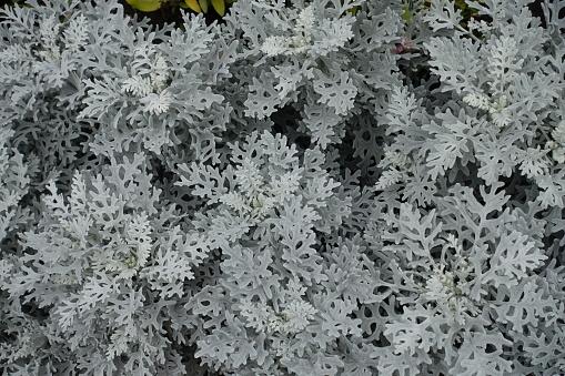 ReForm Transition Leaf light grey 5500