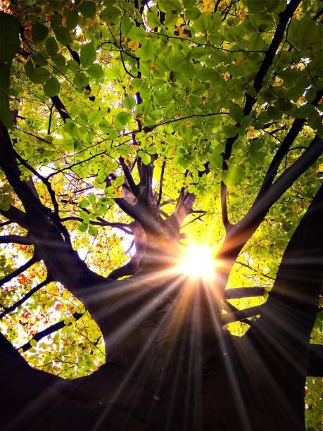 Licht in einem Baum – Foto