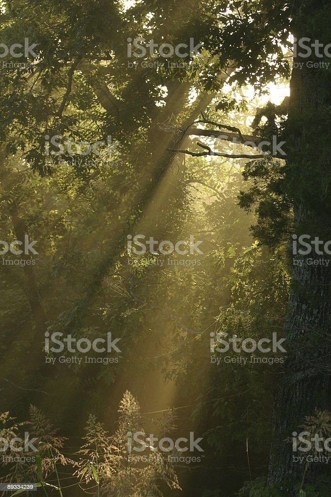 light in the forest stock photo