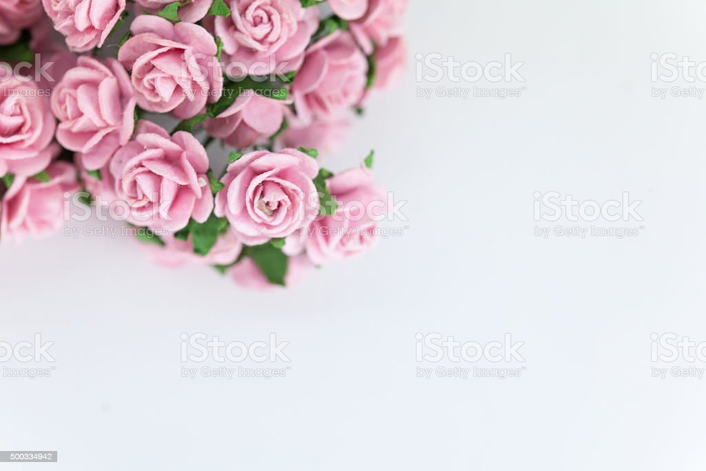Light magenta roses in white isolated background stock photo