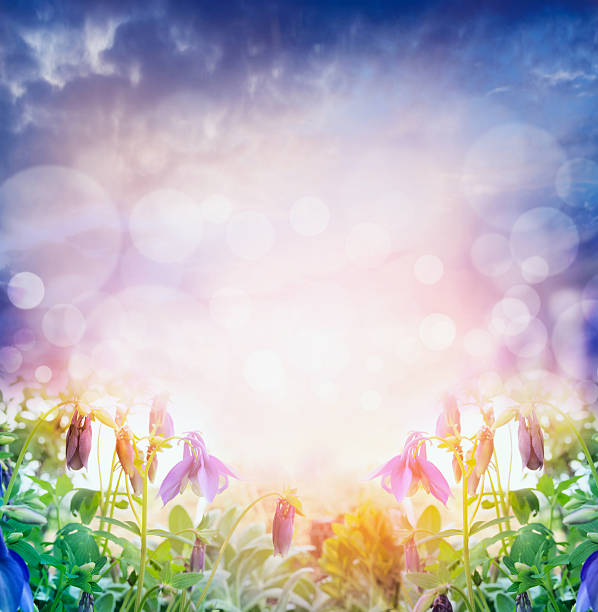 Light nature background with summer flowers stock photo