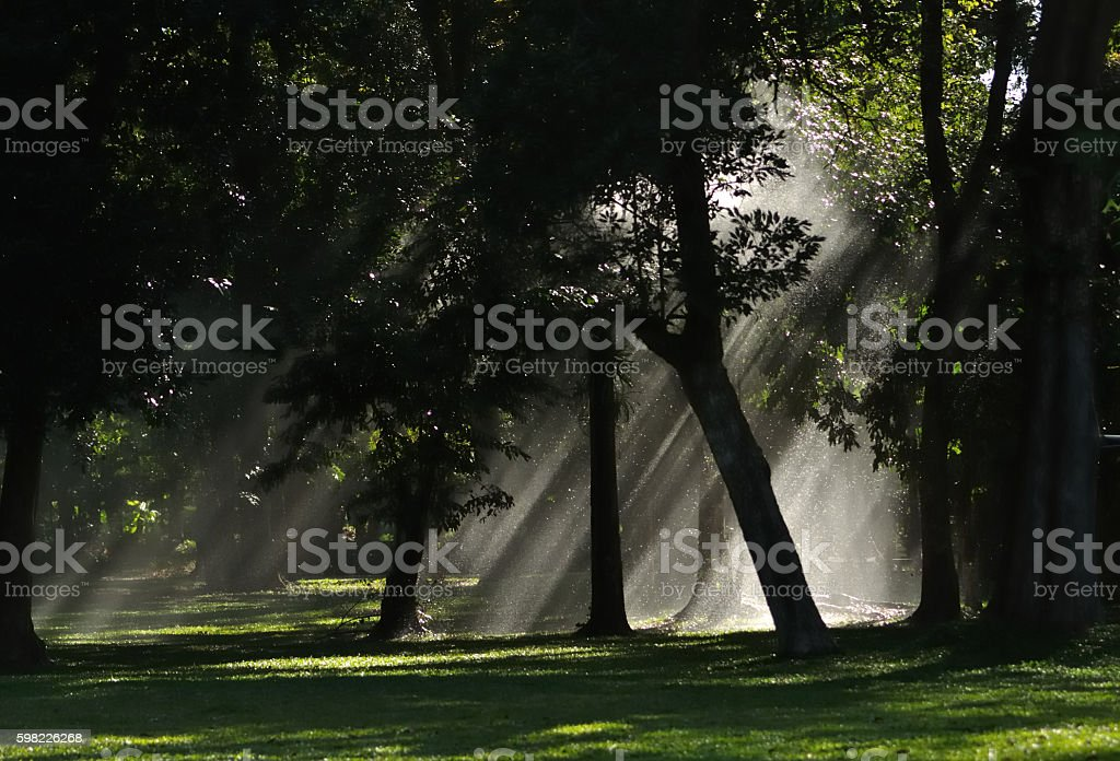 light of heaven in the forest foto royalty-free