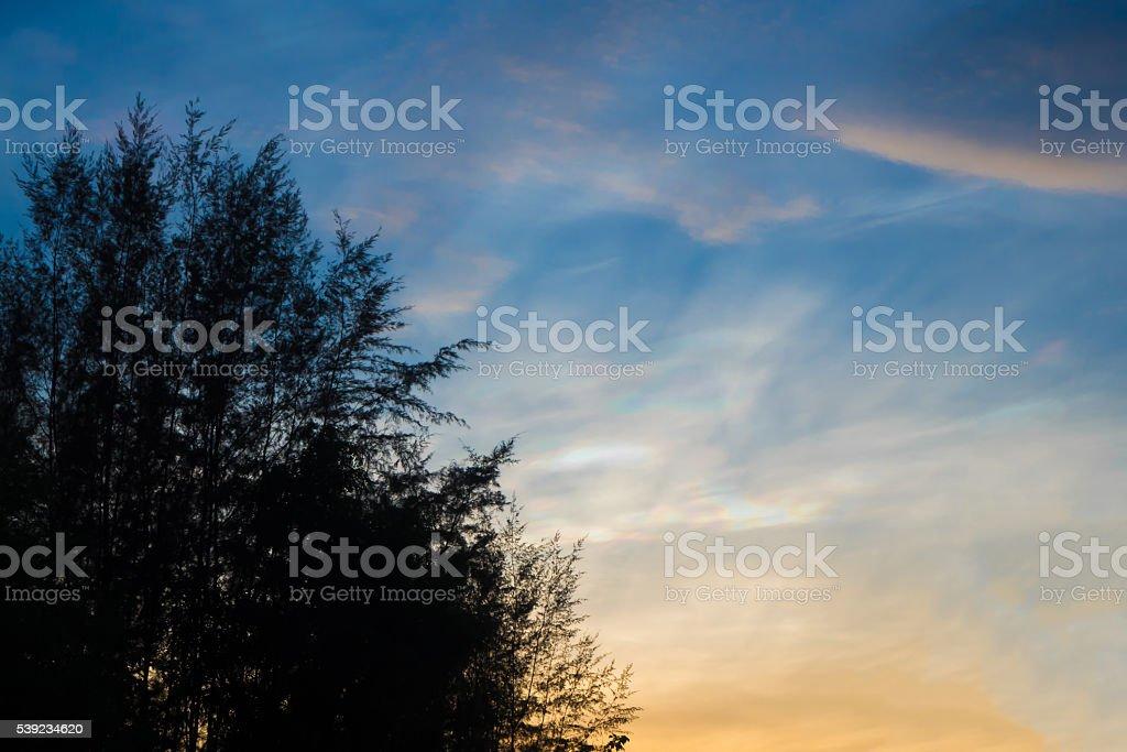 Luz de la puesta de sol y la silueta de árbol foto de stock libre de derechos