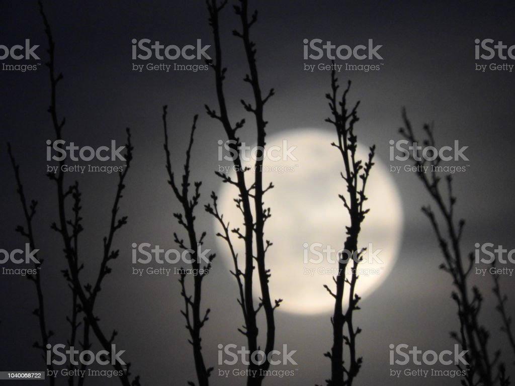 The full moon light behind the trees