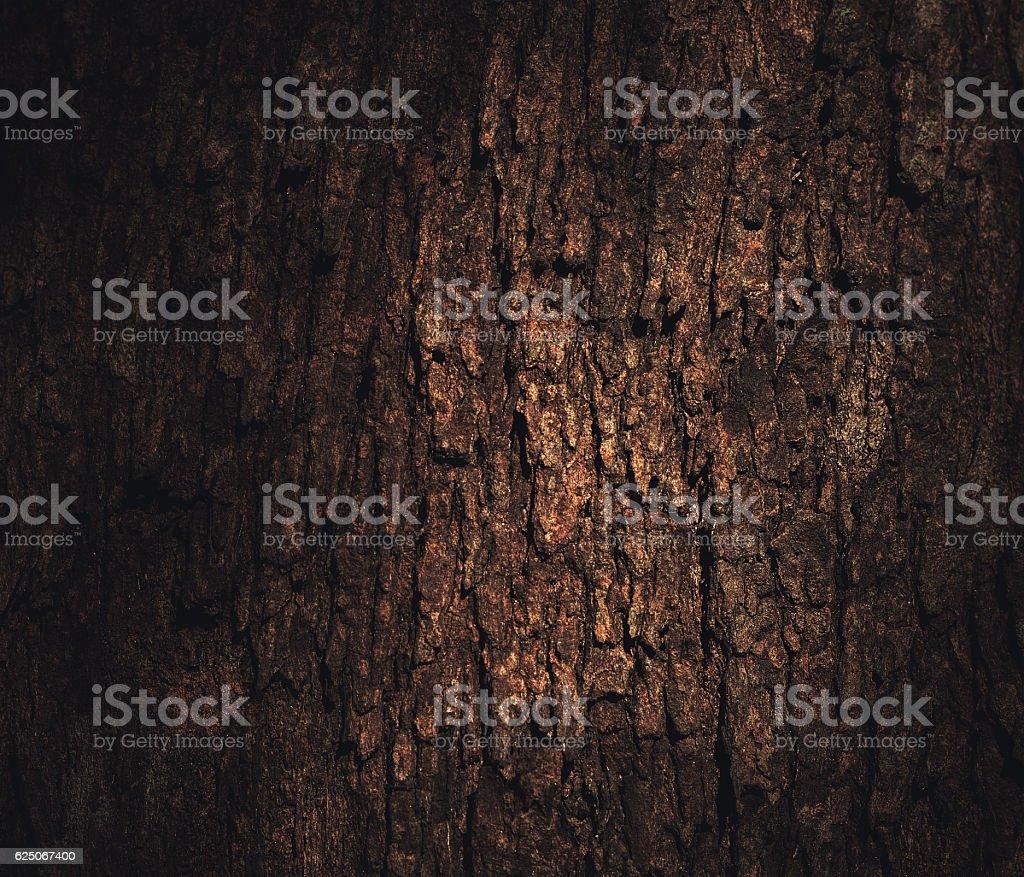 light on the bark stock photo
