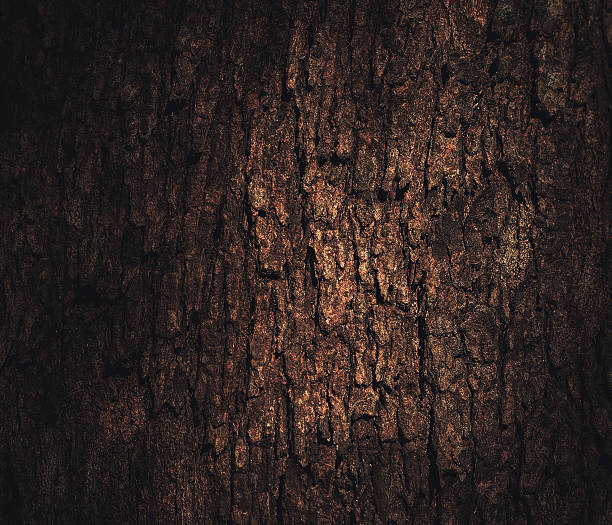 light on the bark – Foto