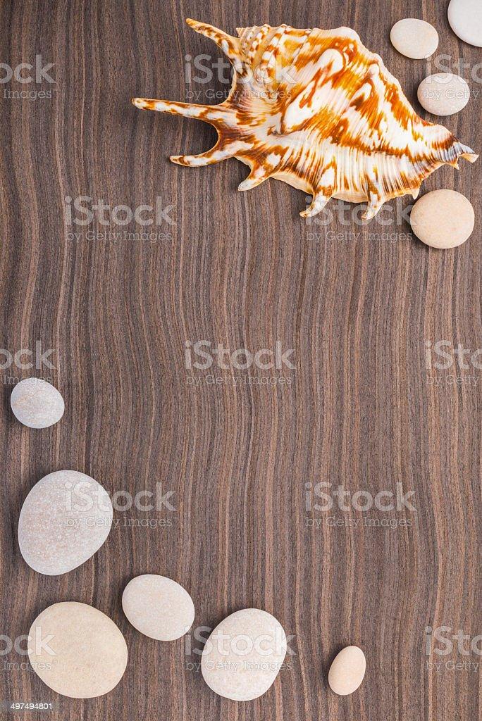 light pebbles and big shell on wooden ebony background stock photo