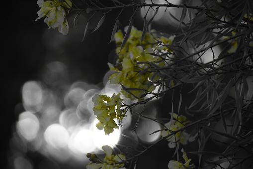 Light penetrates the trees