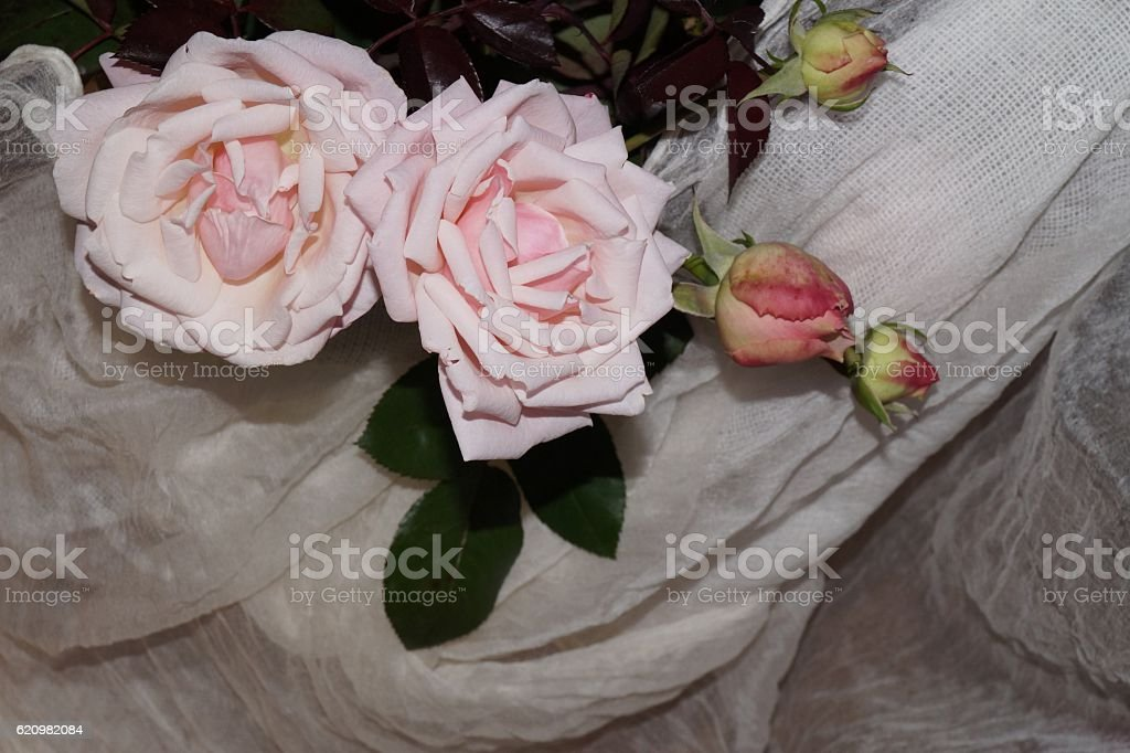 Light pink roses and white silk foto royalty-free