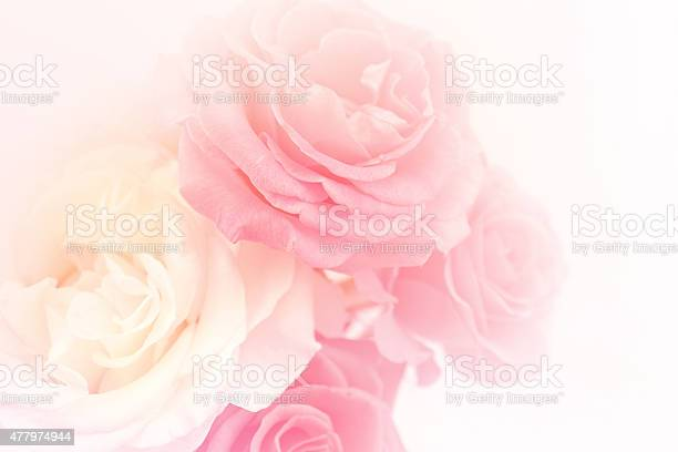 Light pink roses in soft color and blur style picture id477974944?b=1&k=6&m=477974944&s=612x612&h=dh1lrj9fa3m9frsoobdoqeeiupikdzidpp26wou gxm=
